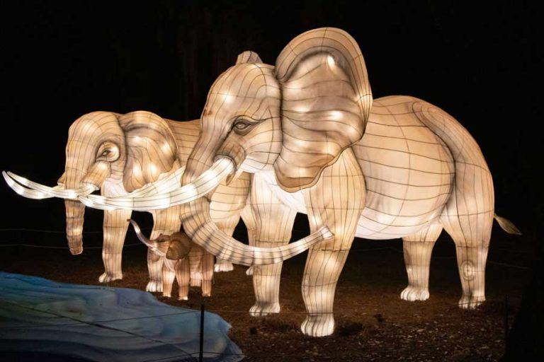 Audubon Zoo Lights Elefanten | ©NOCO