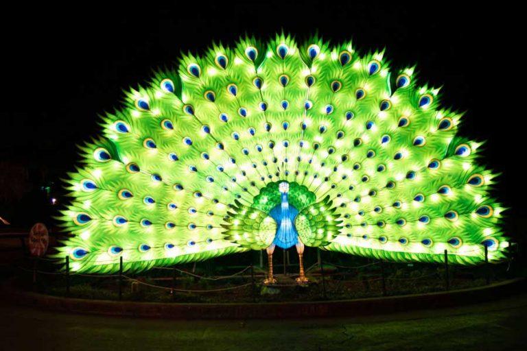 Audubon Zoo Lights Pfau | ©NOCO