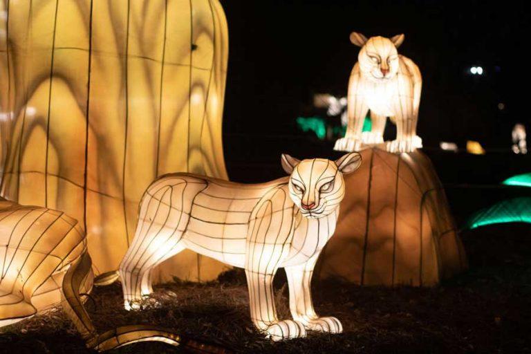 Audubon Zoo Lights Tiger| ©NOCO