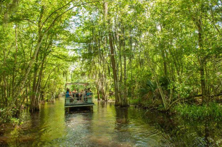 Scenic Swamp Tour