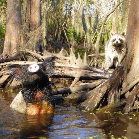 Honey Swamp Tour
